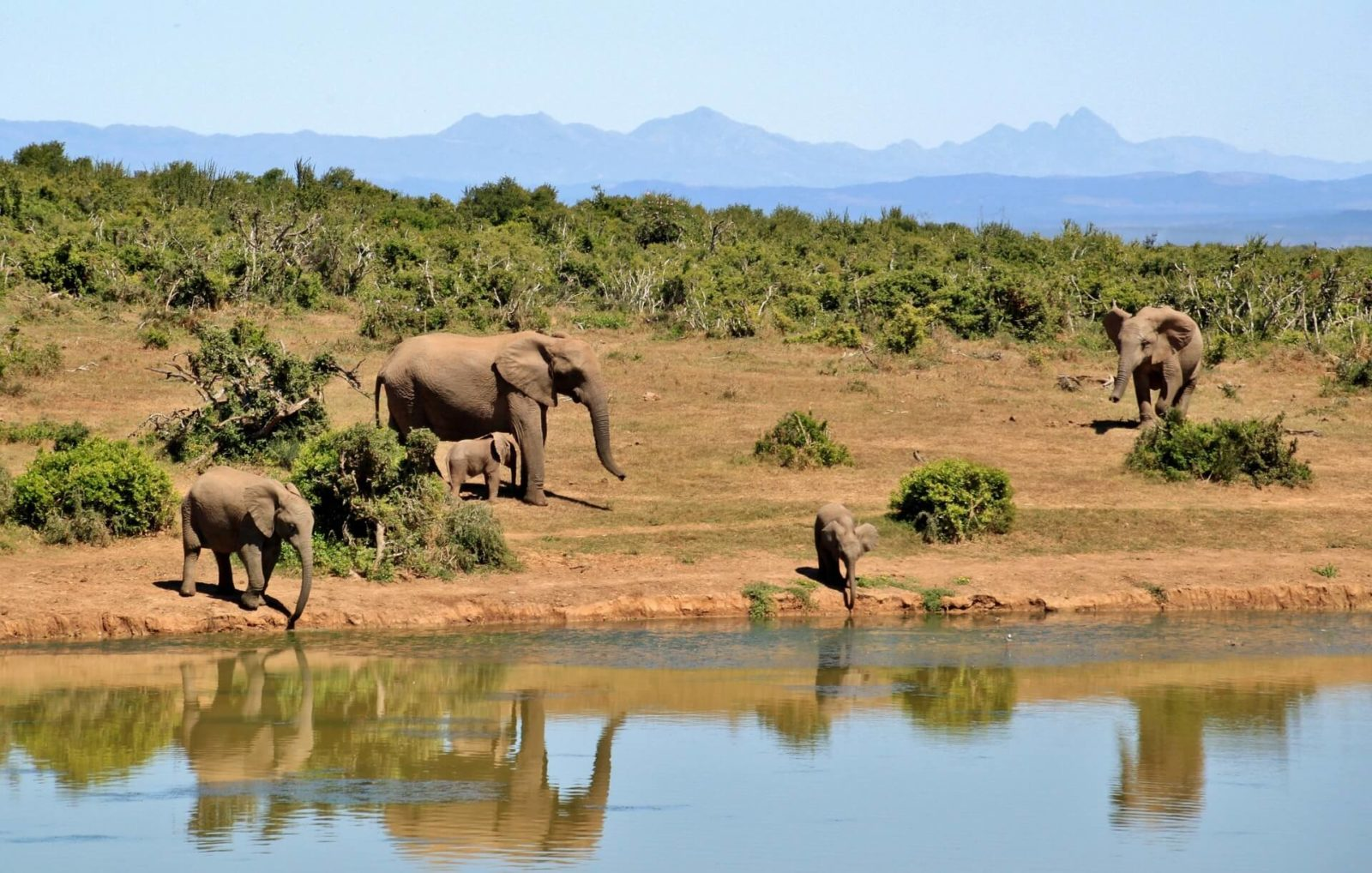 South Africa Holidays - Elephants