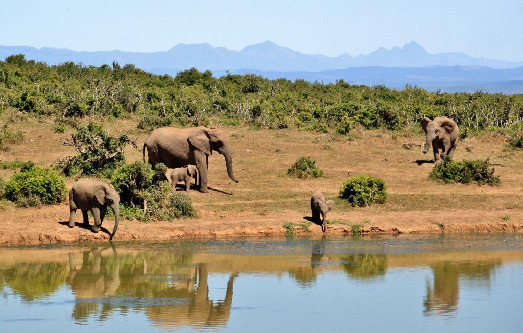 safari in Kenya holidays - Marsabit National Park and Reserve