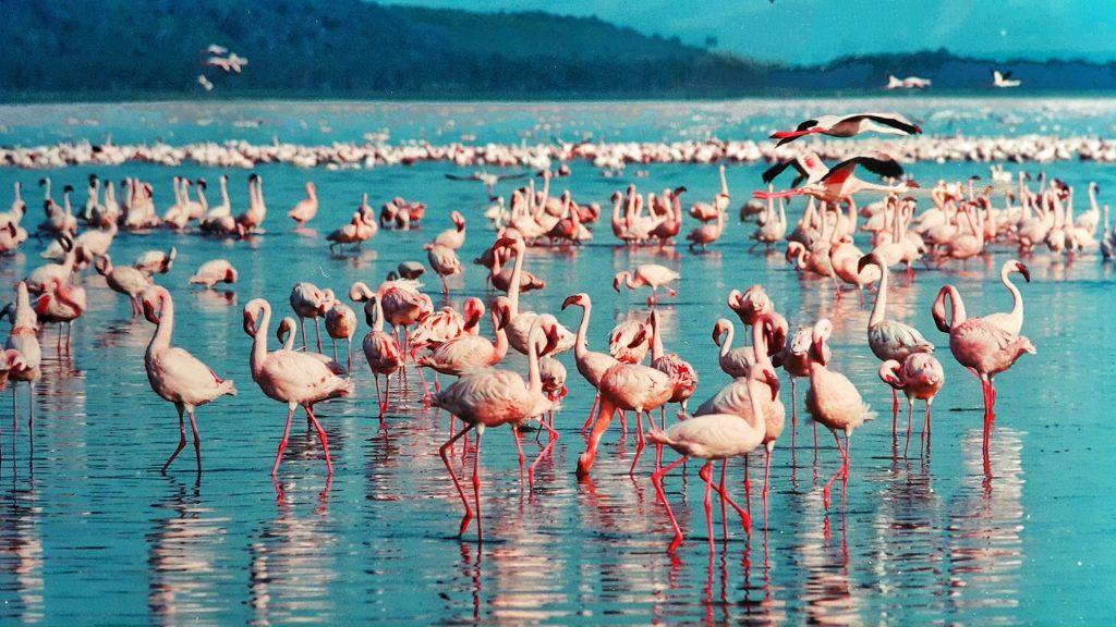 Kenya Safari Tours Lake Nakuru National Park Flamingos
