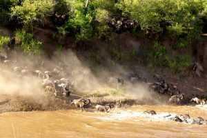 National Parks Kenya the-mara-crossing-wildebeest-migration