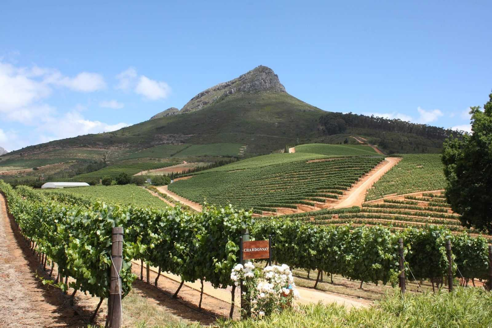 South Africa Holidays Cape Town Winelands