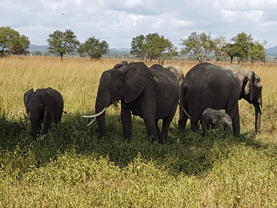 Things to do in Dar es Salaam - Mmikumi_National Park Safari Elephants