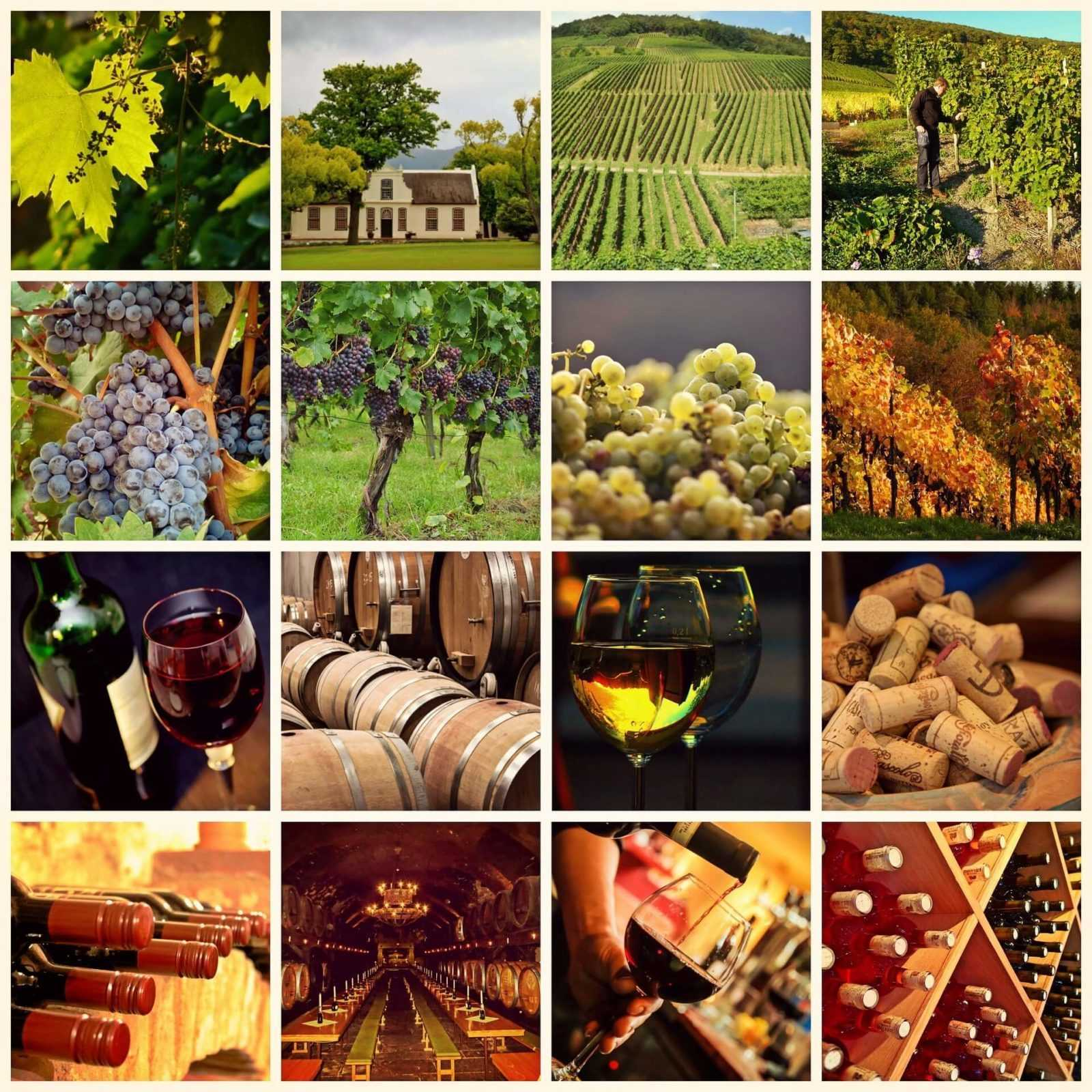 South Africa  - Wine yards - wine tours
