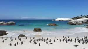 penguins-cape_town