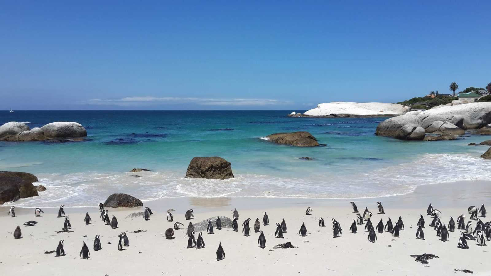 Things to do in Cape Town - Boulders Beach penguins