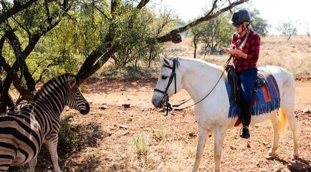 Horseback Tours Johannesburg- wildlife zebra