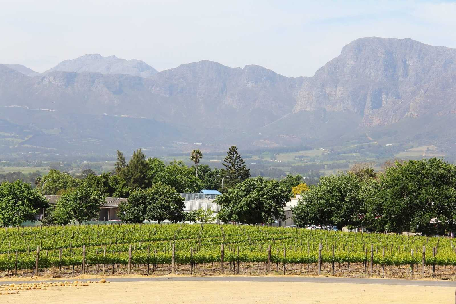 Winelands Tours South Africa vineyard cape town