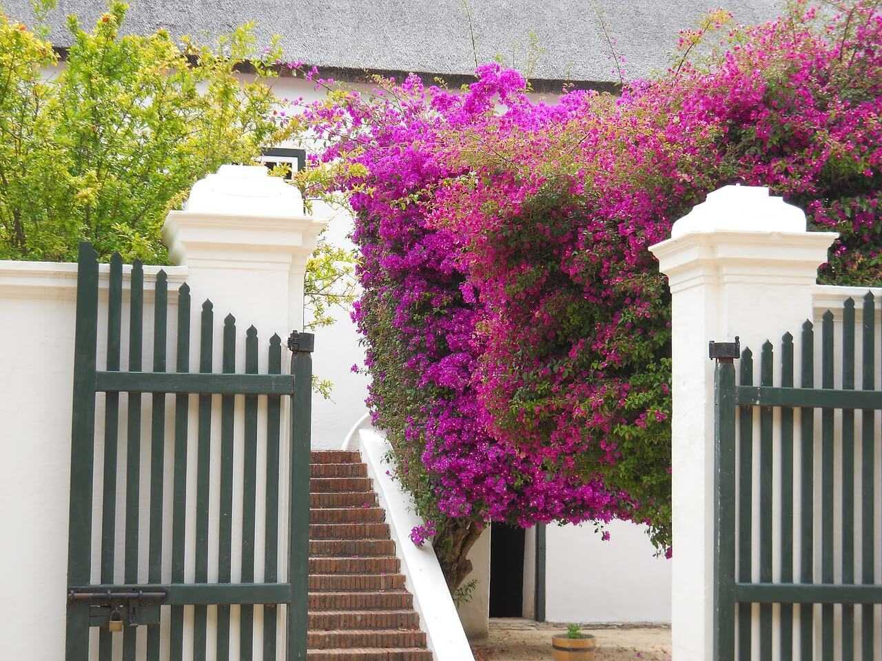 Winelands Tours South Africa Constantia