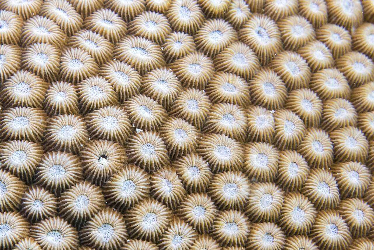 Diving Zanzibar anemone