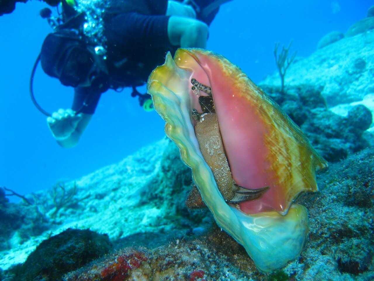 Diving Zanzibar diver