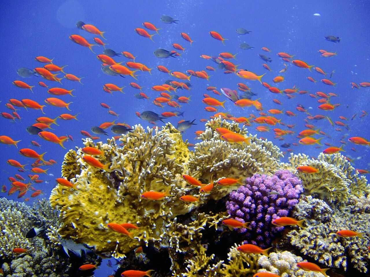 Diving Zanzibar - beautiful and colorful coral reef fishes