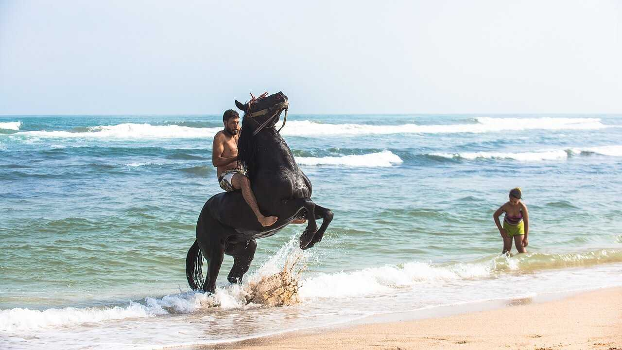 Things to do in Essaouira - horse riding