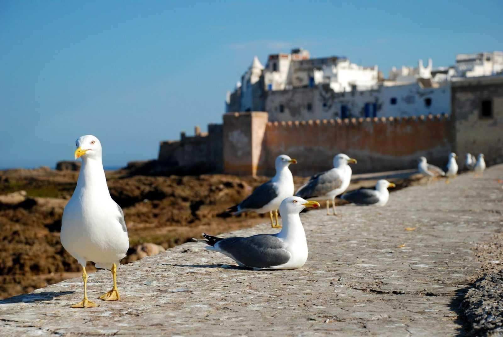 Essaouira tours birds beach