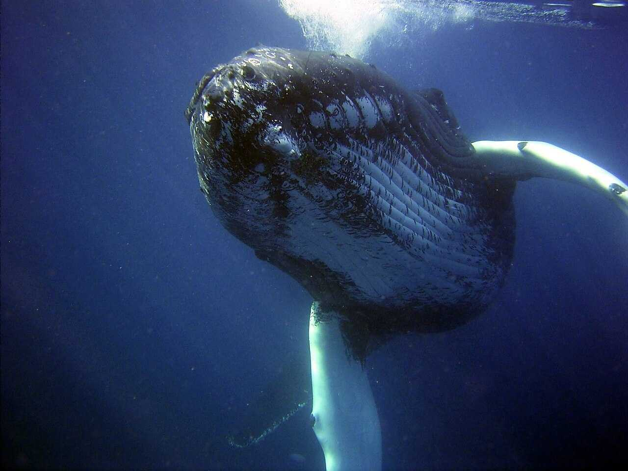 Things to Do in Boa Vista - whale wathing