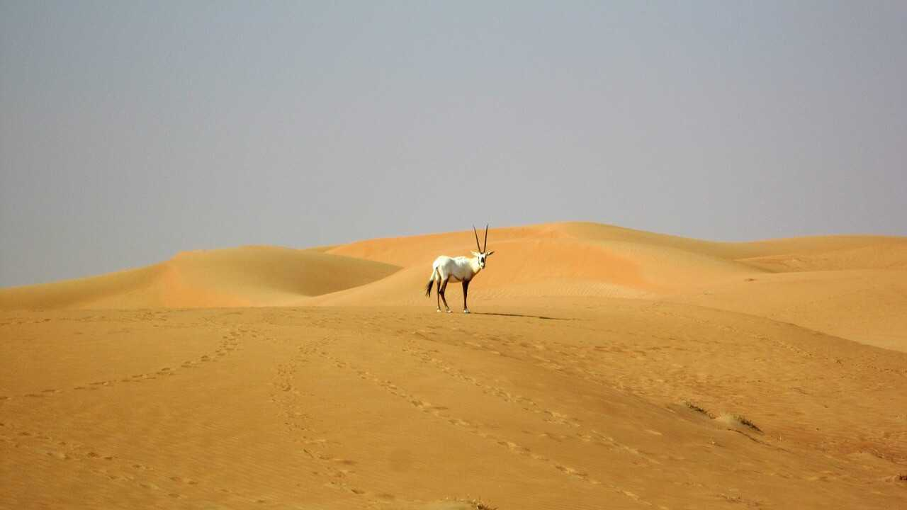 Dubai Desert Tours - Wildlife