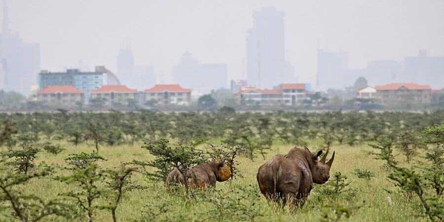 nairobi_national_park_tours_rhino.jpg