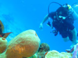 mnemba atoll snorkeling diver
