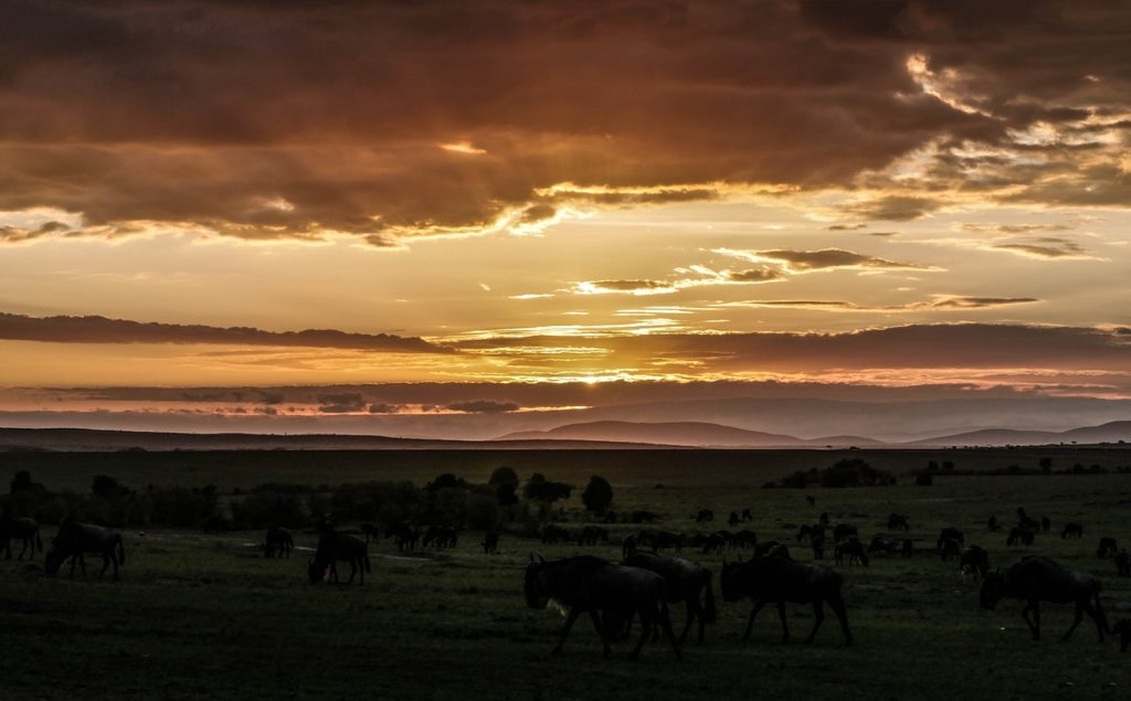 Masai Mara Safari Sunrise