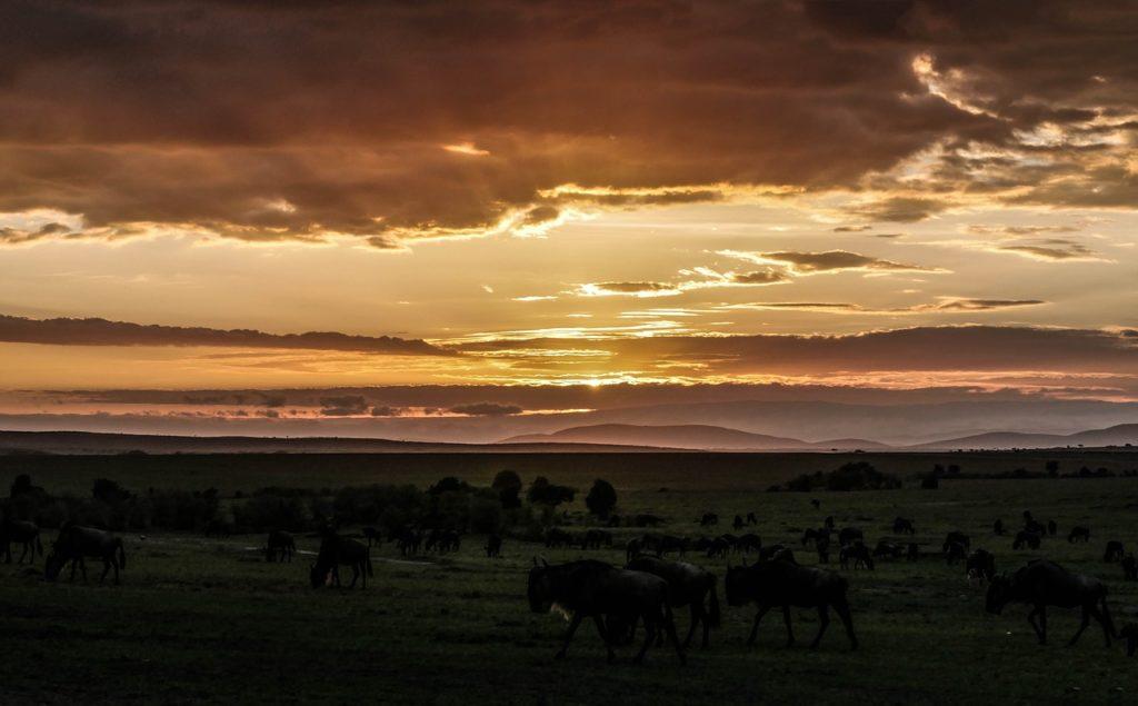 Masai Mara Safari Sunrise