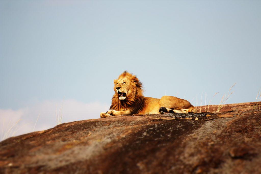 Tanzania Safari Holidays - Serengeti National Park Safari Lion