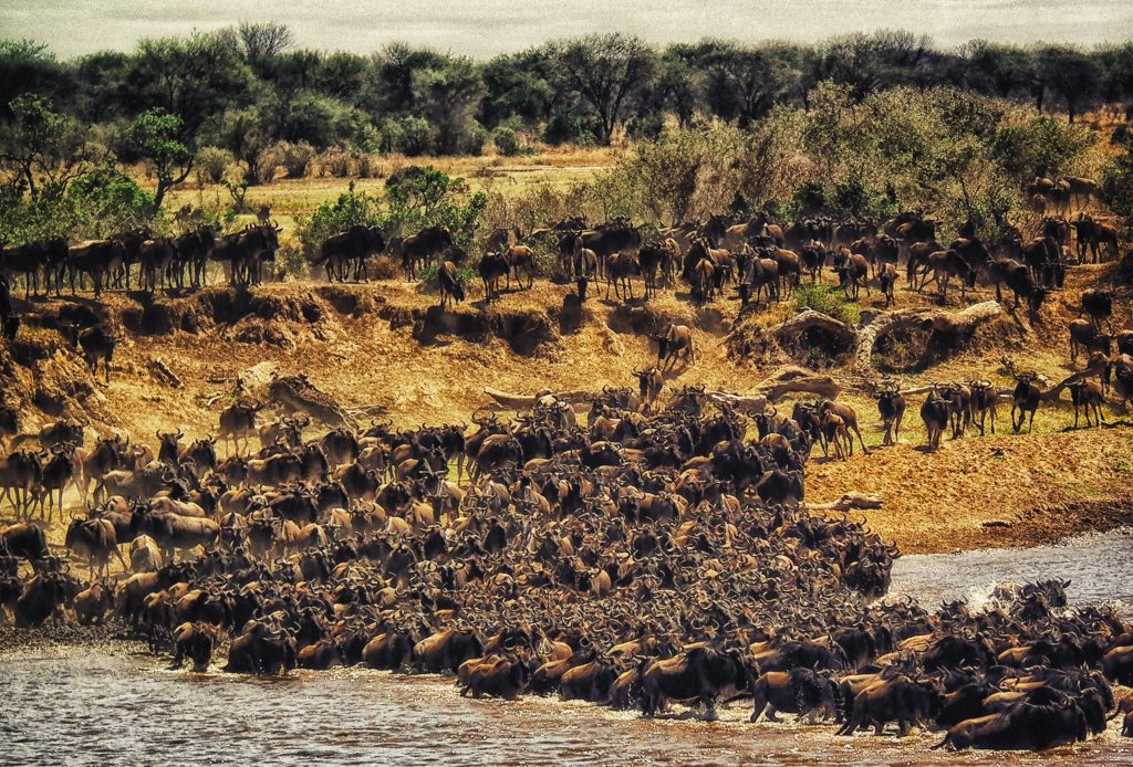 Serengeti National Park Safari - Africa's Great Wildebeest Migration