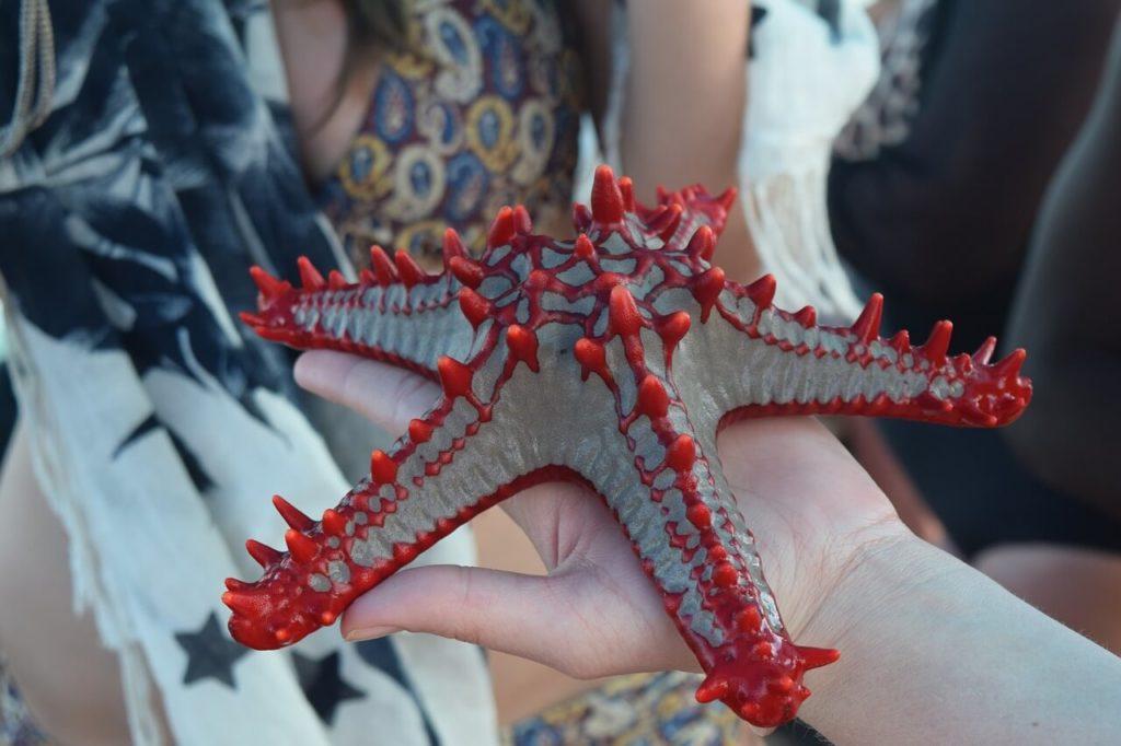 Zanzibar Honeymoon Starfish
