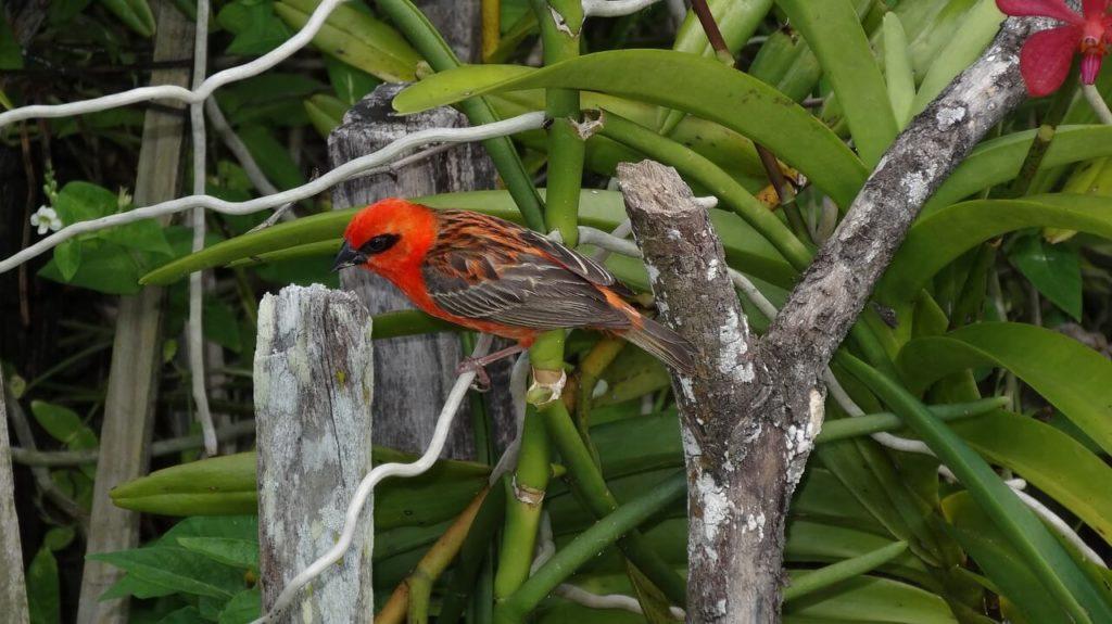 Praslin National Park Birds