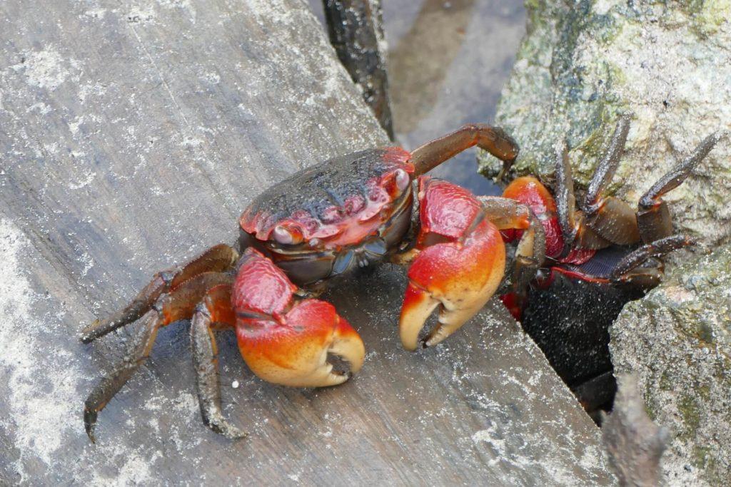 Curieuse Marine National Park Cancer