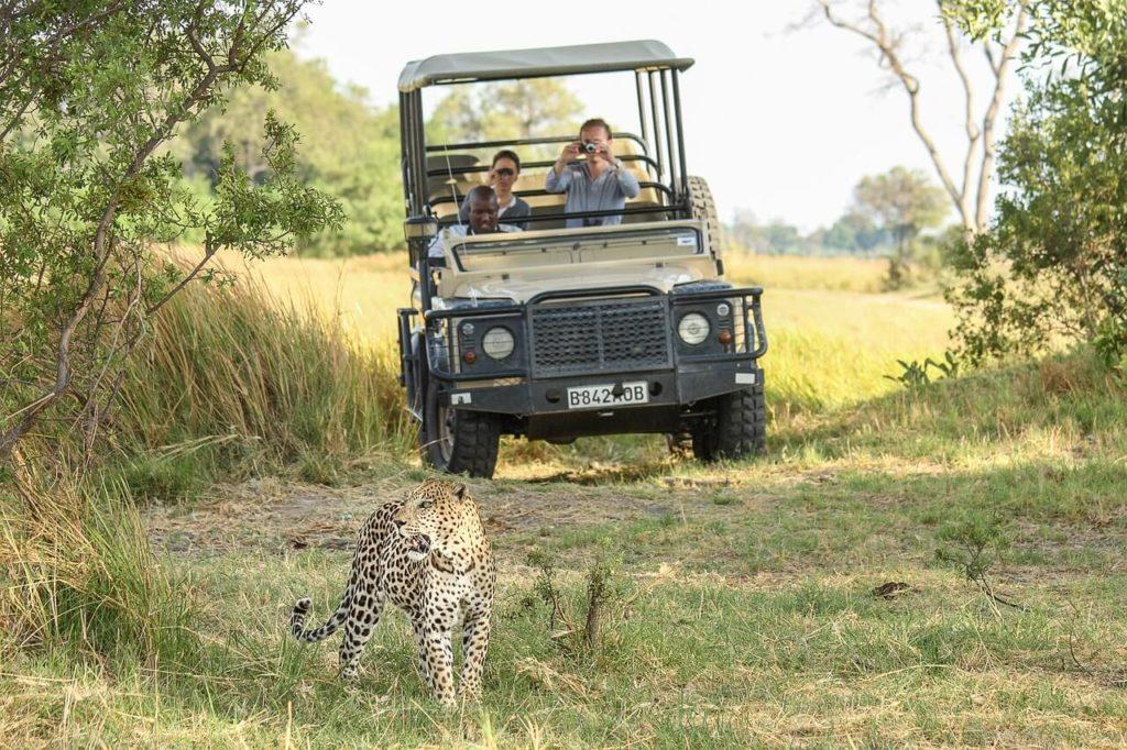 Botswana Chobe Safari Leopard