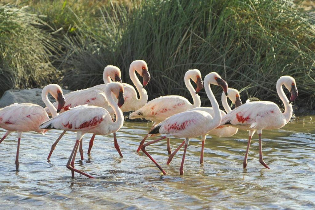 Best time to visit - Flamingos