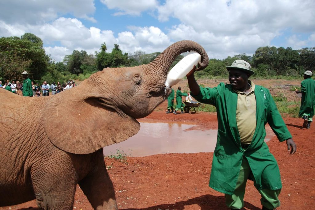 Things To Do in Nairobi - DAVID SHELDRICK WILDLIFE TRUST