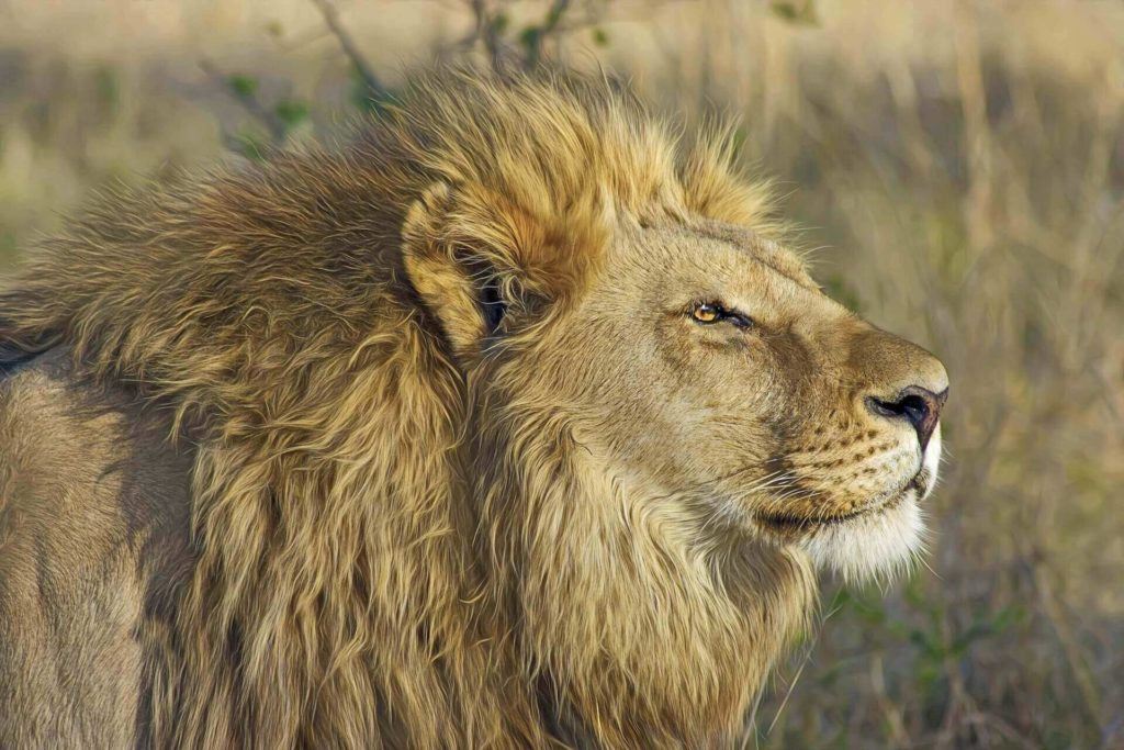 Botswana Safari and Holidays Chobe National Park