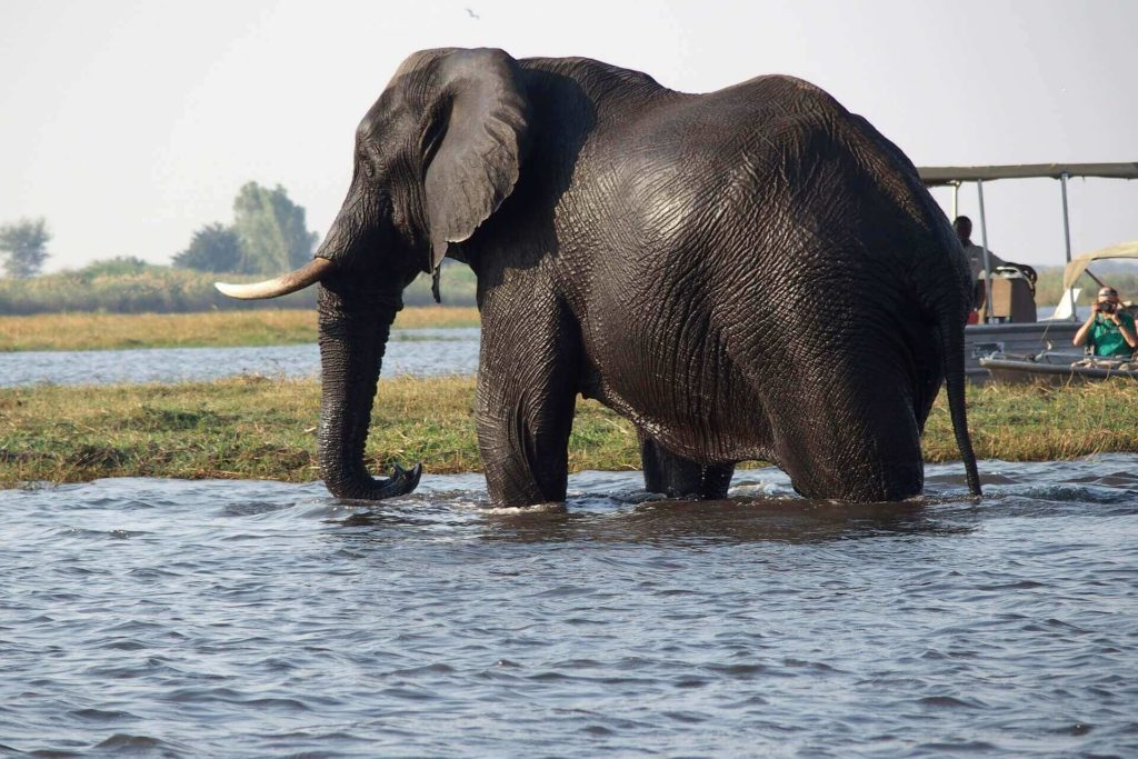 Chobe National Park, Botswana - Holidays in Africa
