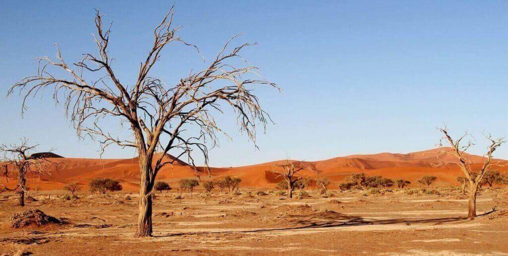 Botswana Safari and Holidays Nxai Pan National Park