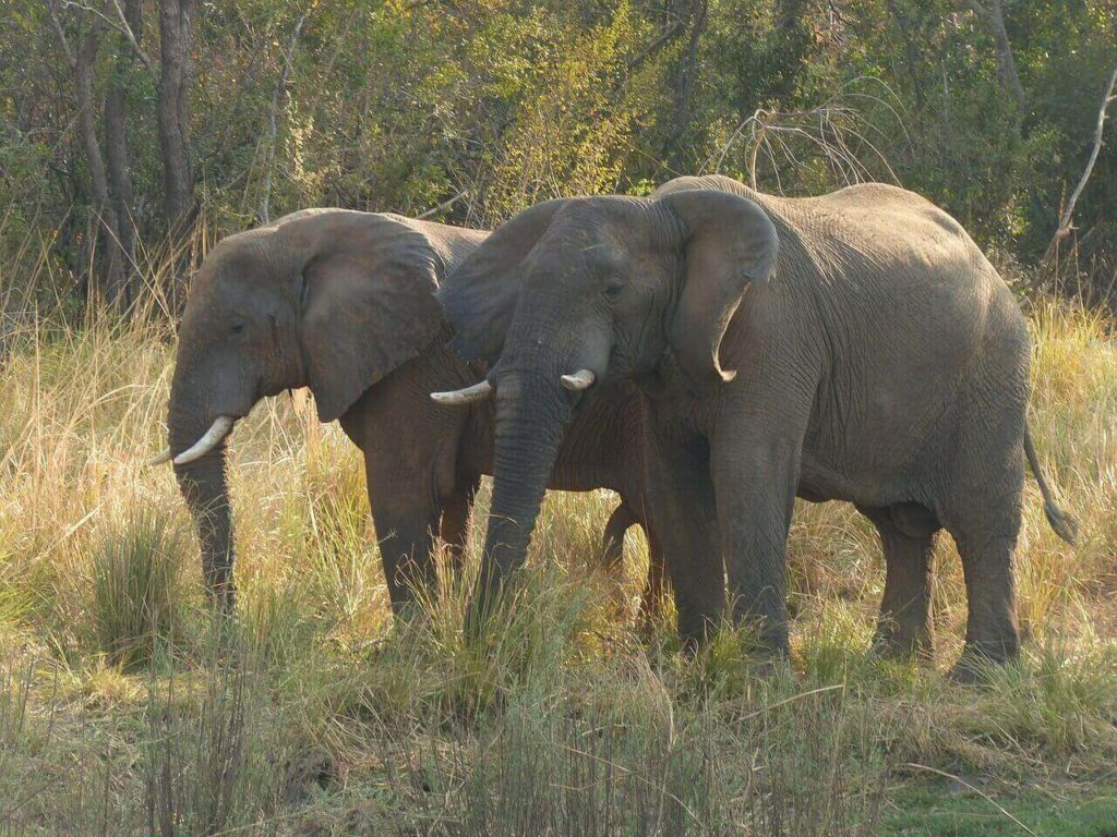 Zimbabwe Holidays Hwange National Park Elephant
