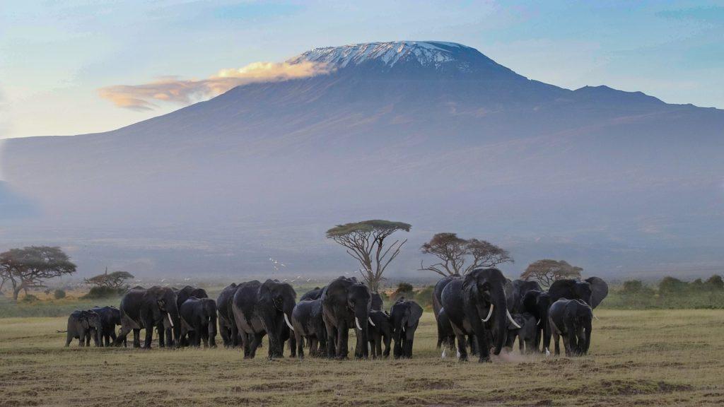 Kenya Safari Tours Amboseli National Park