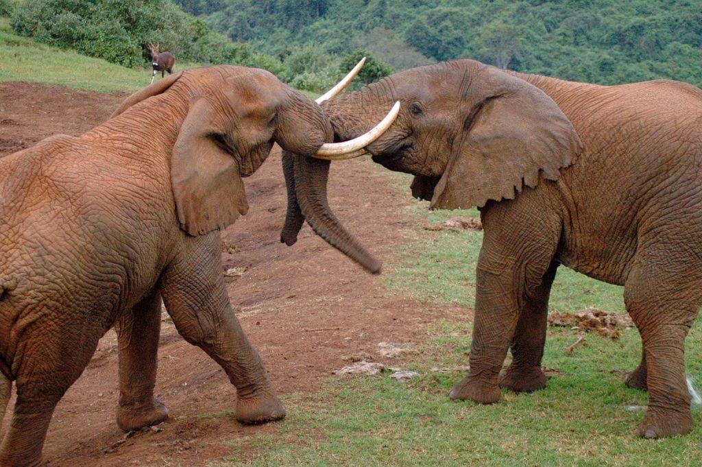 Kenya Safari Tours Aberdare National Park
