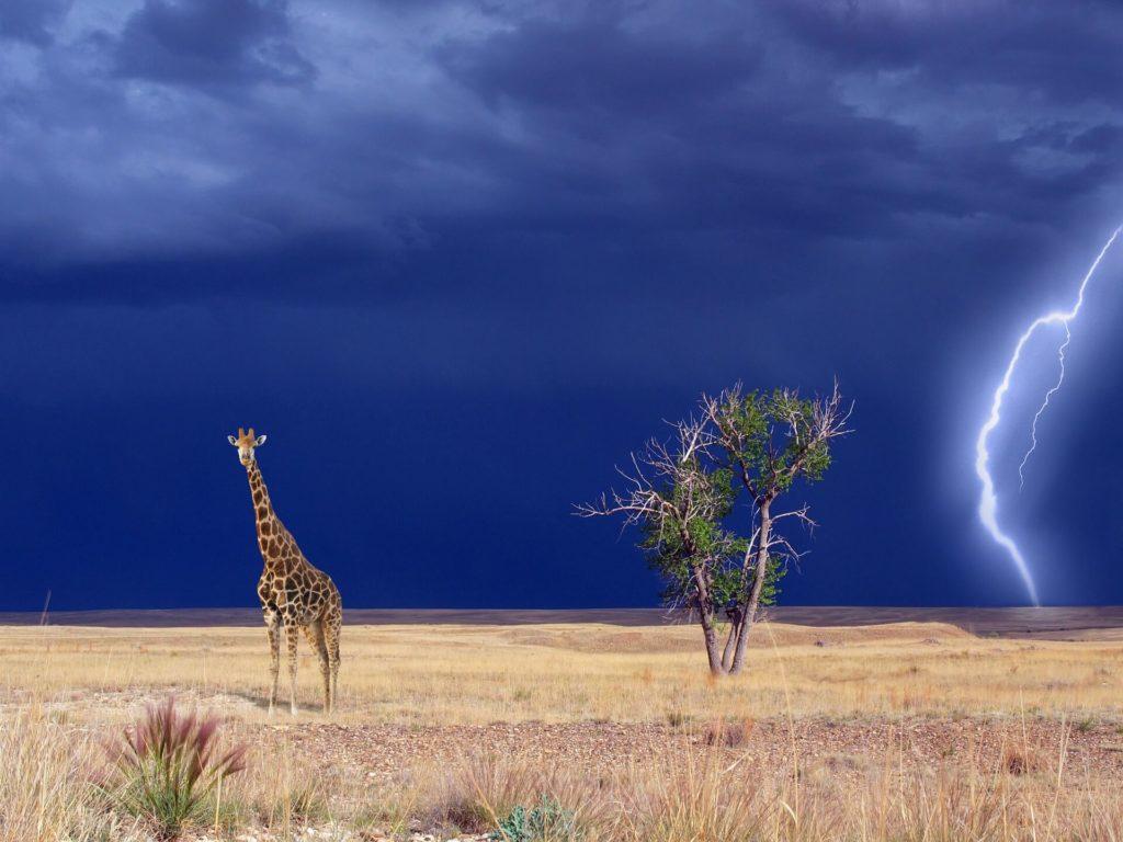 Kenya Safari Tours Tsavo National Park
