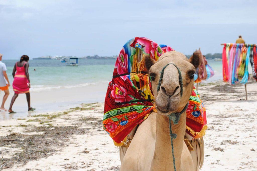 Kenya Safari Mombasa Beach_camel