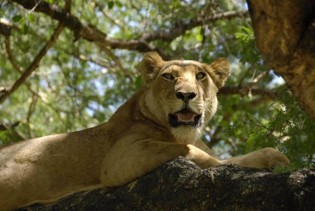 Tanzania Safari Holidays  -Lake Manyara National Park