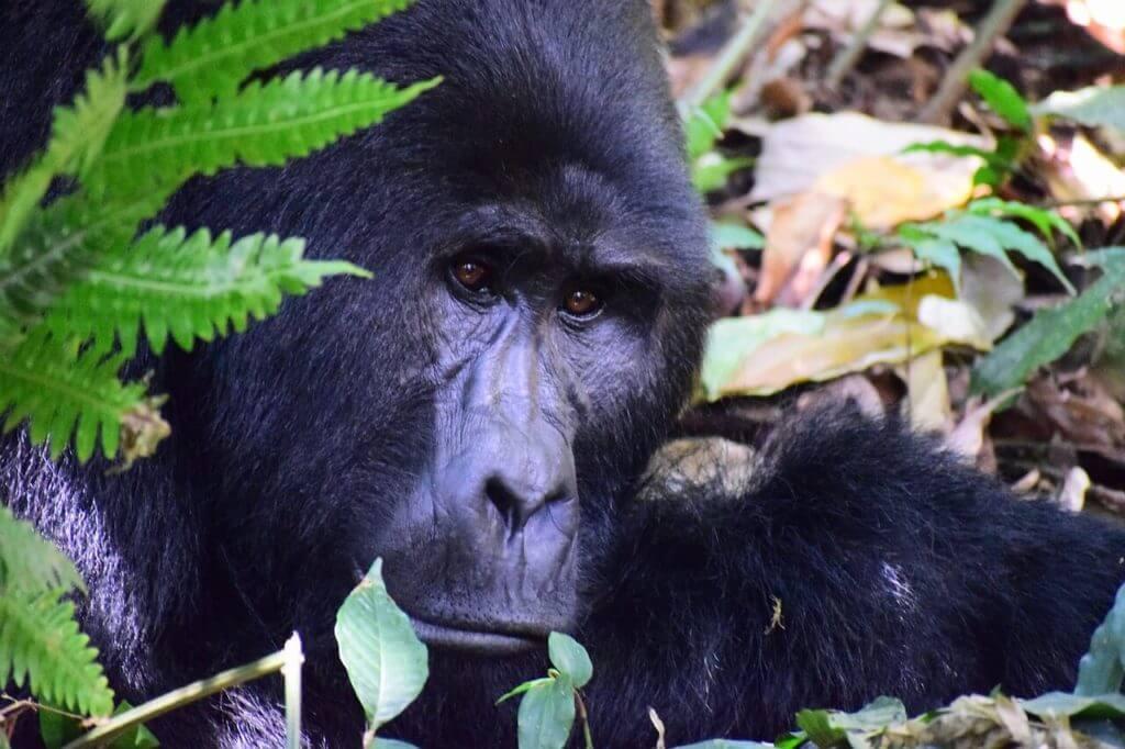 Bwindi Impenetrable National Park - Uganda Safari and Holidays