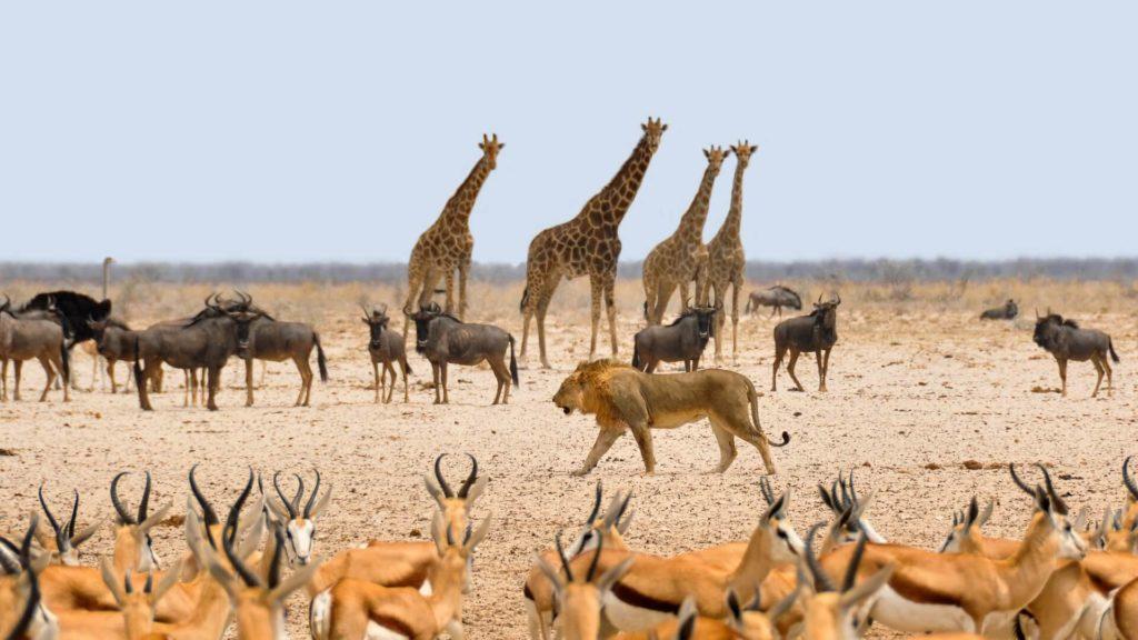 Etosha National Park Safari Tours