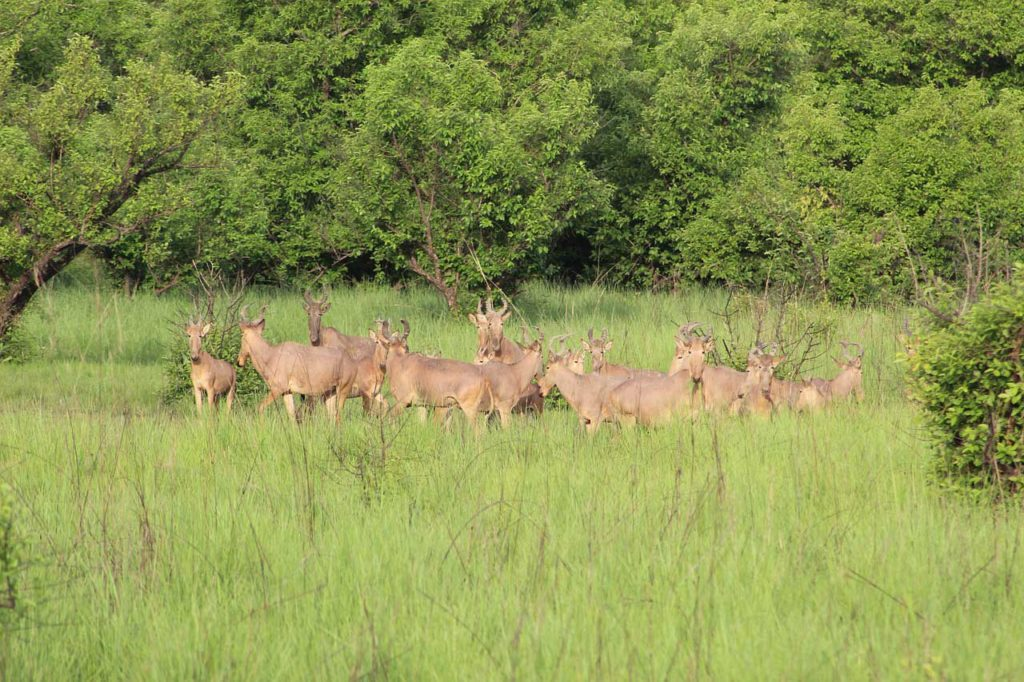 Kyabobo National Park