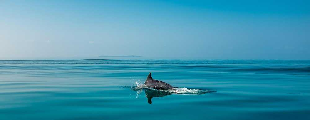 Swim with Dolphins in Mozambique