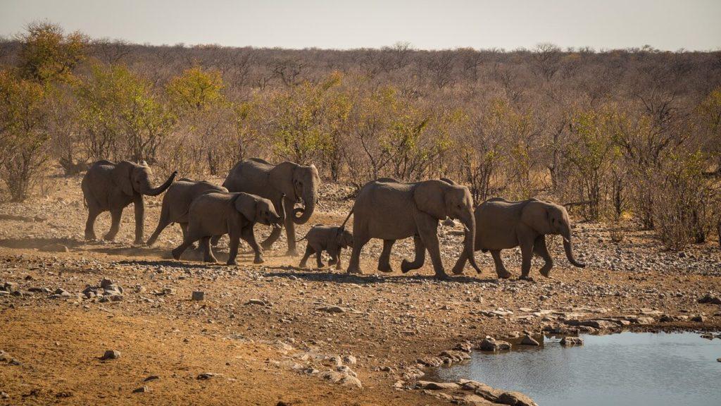 Namibia Safari and Holidays Etosha National Park Safari