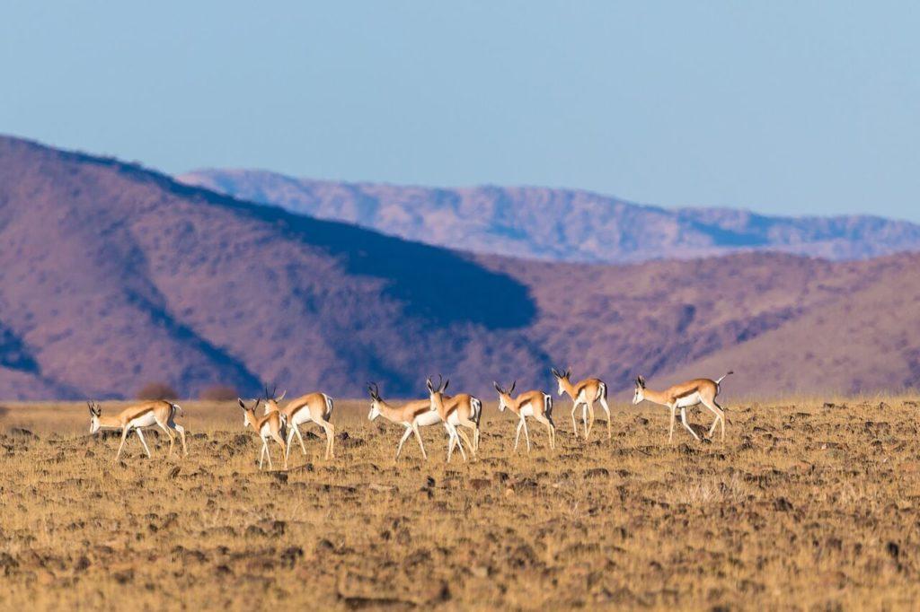 Khaeb National Park