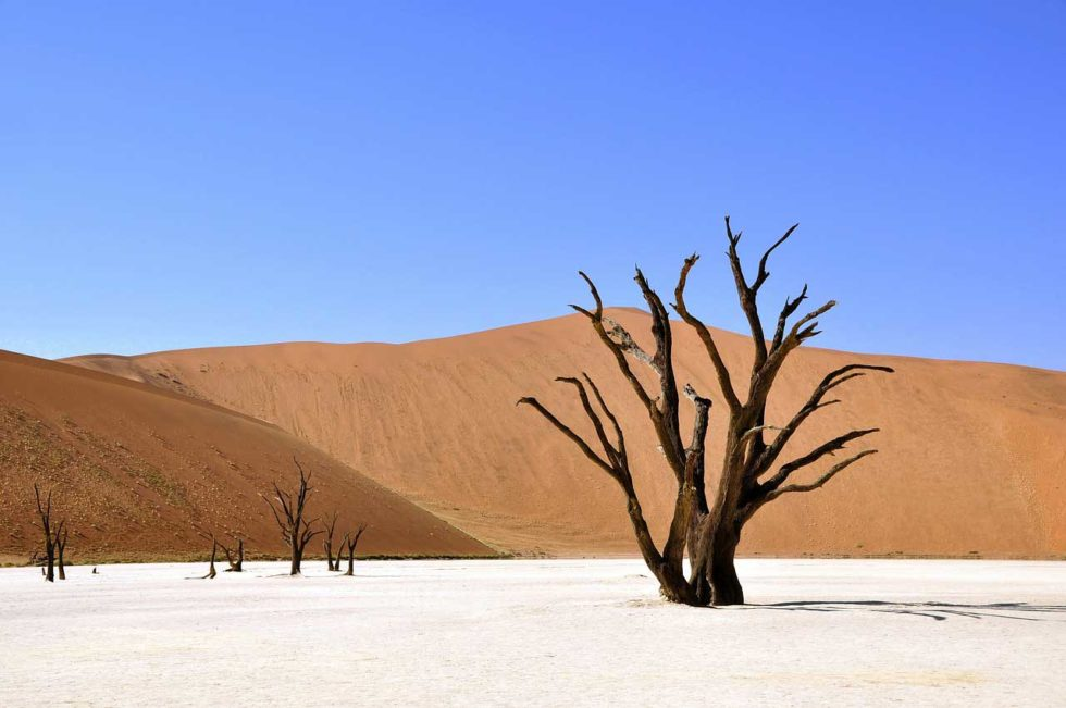 Namibia Safari and Holidays Desert Tree