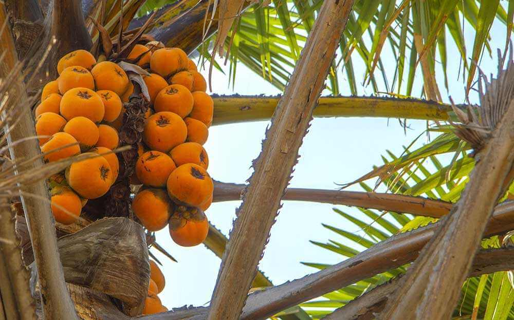 Nigeria Holidays and Travel Guide - Nature
