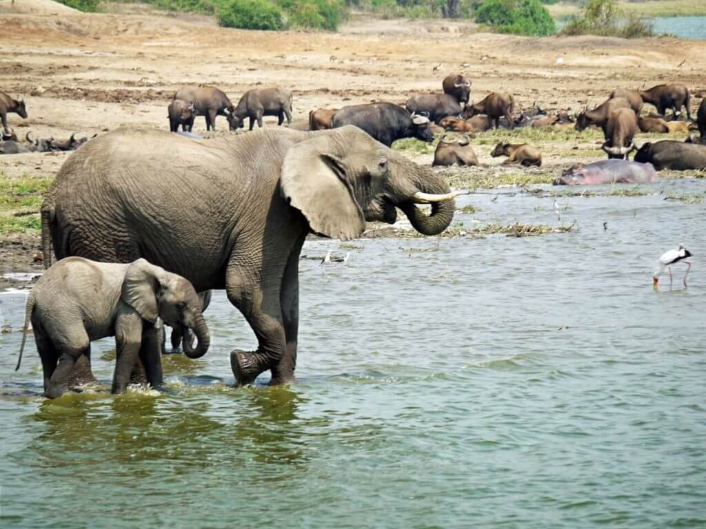 Queen Elizabeth National Park - Uganda Safari and Holidays