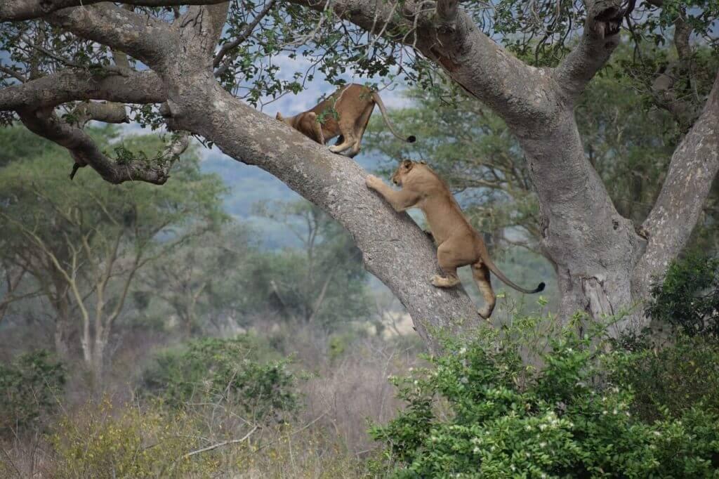 Uganda Safari Holidays -Nature & Wildlife Areas